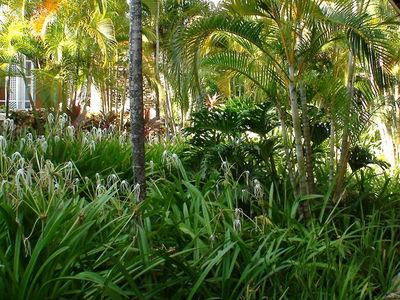 cazare la Hotel Amhsa Grand Paradise Playa Dorada