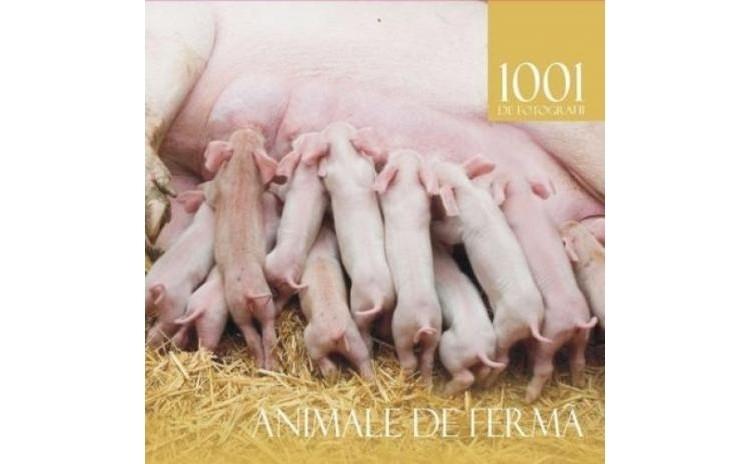 Animale de ferma, autor Simona Ceausu