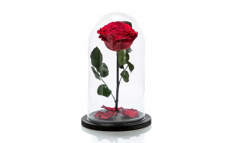 Trandafir criogenat rosu