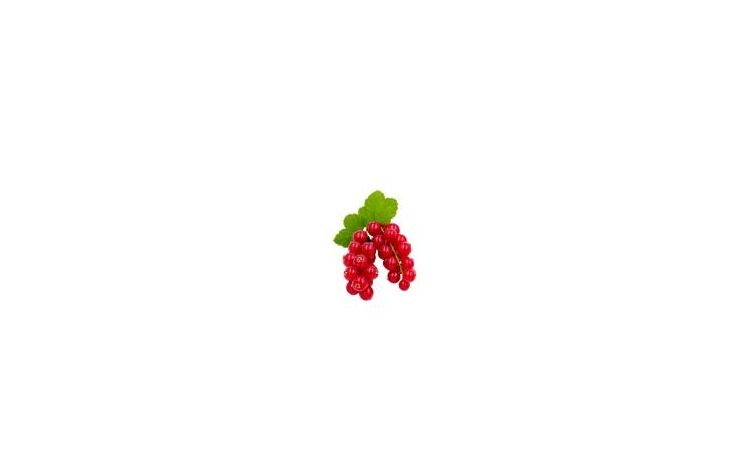 Coacaze rosii caserola 125gr
