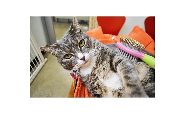 Pachet: tuns pisica, spalat, toaleta generala si deparazitare interna