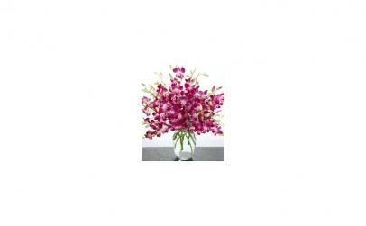Buchet de 49 orhidee dendrobium mov