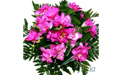 Buchet de 31 frezii roz