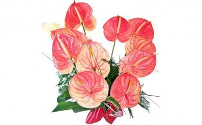 Buchet de 19  anthurium roz
