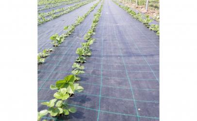 Folie Agrotextil 1.50 x 10m