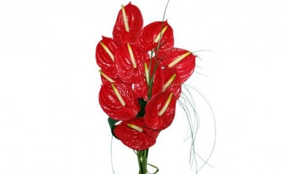 Buchet de 11 anthurium rosii