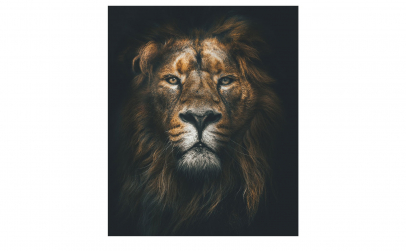 Tablou Canvas Lion 75 x 95 cm
