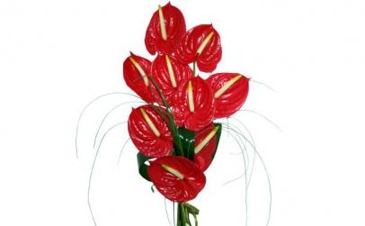 Buchet de 9 anthurium rosii