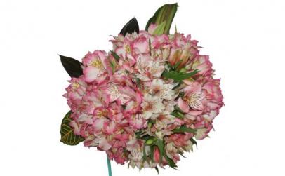 Buchet de 35 alstroemeria roz