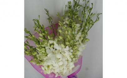 Buchet de 49 orhidee dendrobium albe