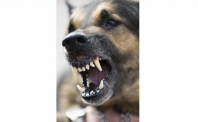 Aparat anti-caini Dog Chaser