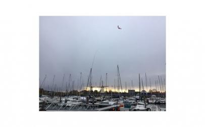 Zmeu Soim - Hawk Kite Birdscarer Votton