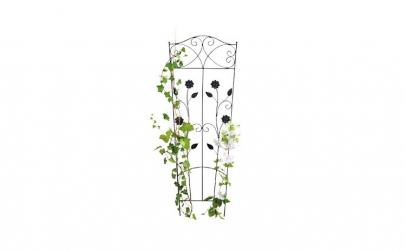 Spalier plante