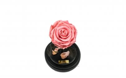 Trandafir Criogenat Roz Queen Roses