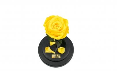 Trandafir Criogenat Galben Queen Roses