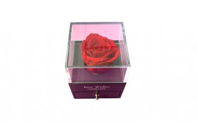 Trandafir Criogenat rosu, BV, 10 cm ,