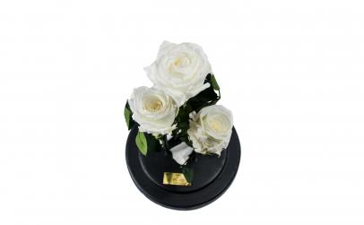 Aranjament 3 Trandafiri Criogenati Albi