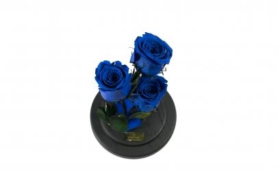 Aranjament 3 Trandafiri Criogenati