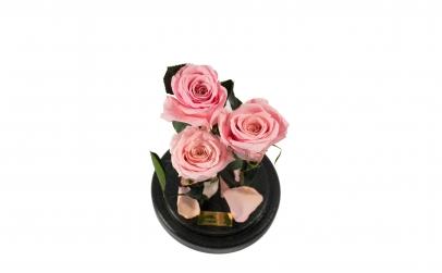Aranjament 3 Trandafiri Criogenati Roz