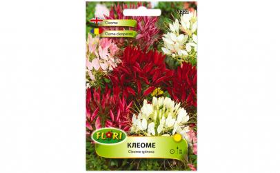 Seminte de cleoma   floare paianjen