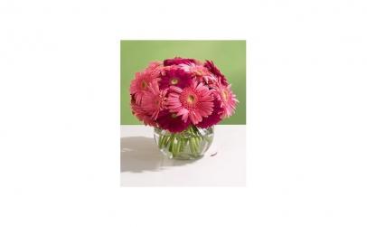 Buchet de 75 gerbera roz