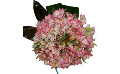 Buchet de 25 alstroemeria roz
