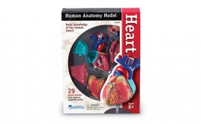 Corpul uman - Inima, Macheta cu 29 piese
