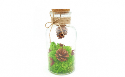 Terariu cu licheni naturali, 19x10 cm