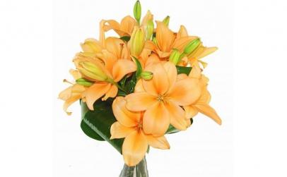 Buchet de 5 crini asiatici portocalii