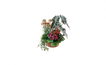 Aranjament din plante
