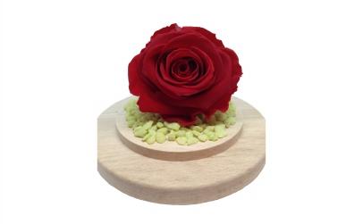 Trandafir criogenat rosu aprins