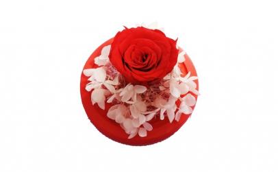 Trandafir Criogenat rosu, BV, Hortensia