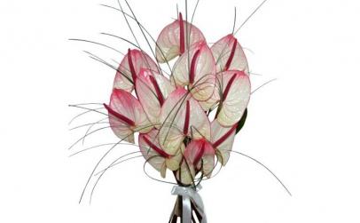 Buchet de 11 anthurium roz
