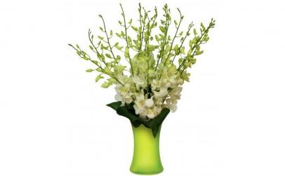 Buchet de 19 orhidee dendrobium albe
