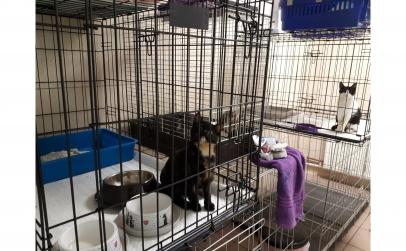 Pensiune câini mici și pisici