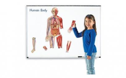 Macheta corpul uman   Set magnetic