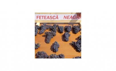 Butasi vita de vie Feteasca Neagra