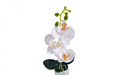 Aranjament orhidee in ghiveci