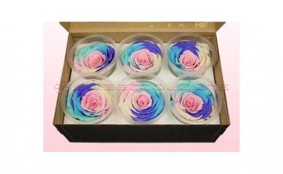 Trandafiri Criogenati 6 la cutie Rainbow