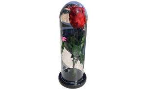 Trandafir criogenat KotaBaby