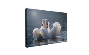 Tablou Canvas Lebede Îndrăgostite, 60 x 90 cm, 100% Poliester