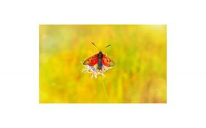 Tablou Canvas cu Animale 881 20 x 30 cm