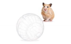 Minge hamster transparenta