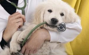 Vaccin animalute