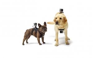 Ham pentru caini compatibil cu GoPro, Petshop