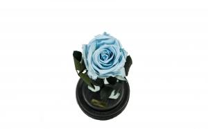 Trandafir Criogenat Bleu Queen Roses