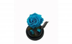 Trandafir Criogenat Turcoaz Queen Roses