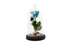 Trandafir Criogenat Multicolor Queen Ros