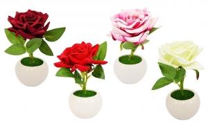 Trandafir ghiveci
