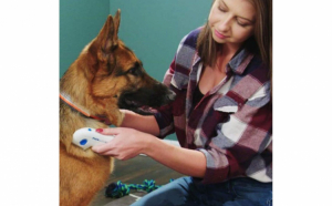 Pieptene de purici, pentru caini si pisici - Flea Doctor